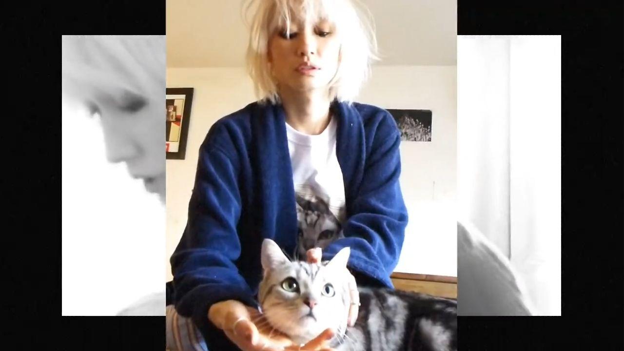고양이와 함께한 하루