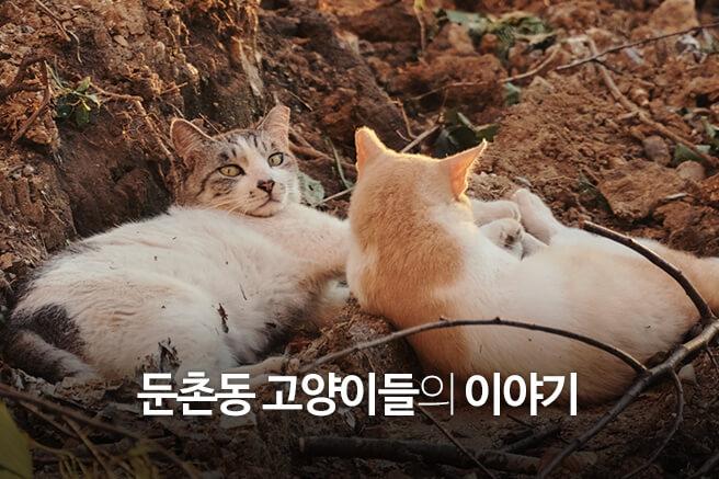 둔촌동 고양이들의 이야기