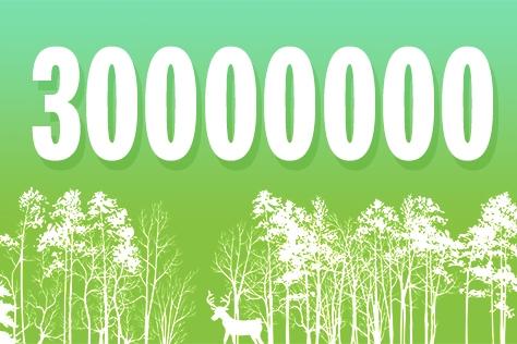 전세계 다른 대륙, 다른 기후, 다른 토양에 사는 3천만 그루의 나무들을 조사해 새로 알게 된 사실은?::넘버스,나무,숲,연구,엘르,elle.co.kr::