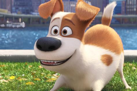영화에서만 만나기 너무 아쉬워요. 평생 같이 살고 싶을 정도로 귀여운 애니메이션 속 동물 캐릭터들.::펫,반려 견,반려 묘, 반려 동물,영화,동물 영화,동물 캐릭터,동물 애니,마이펫의 이중생활,주토피아,도리를 찾아서,라따뚜이,쿵푸판다,씽,볼트,슈렉,엘르,elle.co.kr::