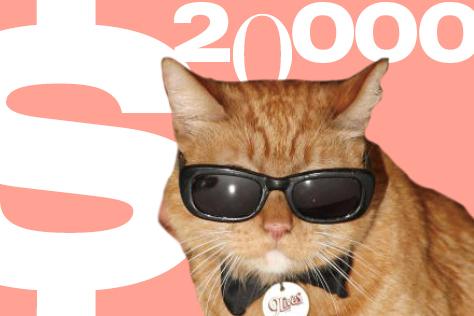 집 나간 고양이를 찾기 위해 내건 현상금 액수는?  ::넘버스,숫자,집나간 고양이,고양이,잃어버린 고양이,현상금,집사,반려동물,엘르,elle.co.kr::