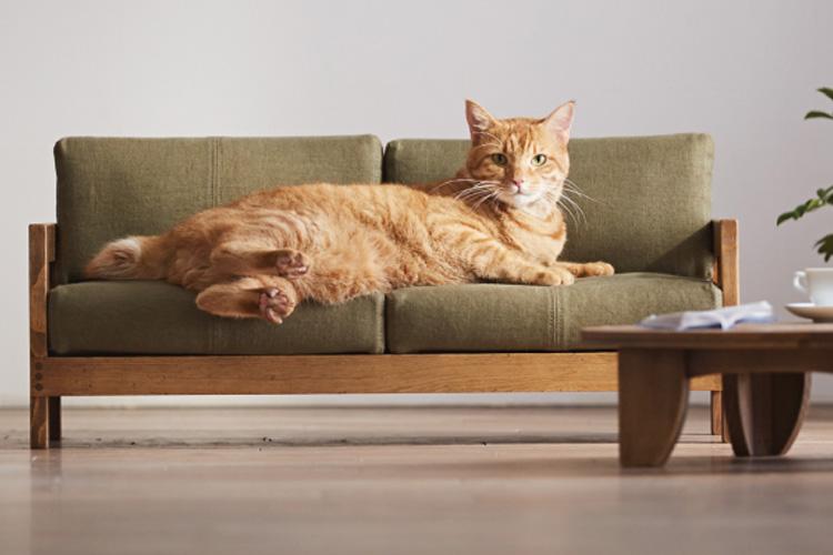 집사 지갑을 노리는 고양이 가구가 등장했다::고양이, 고양이 가구, 일본, 고양이 침대, 고양이 소파, 핸드메이드 가구, 엘르, elle.co.kr::