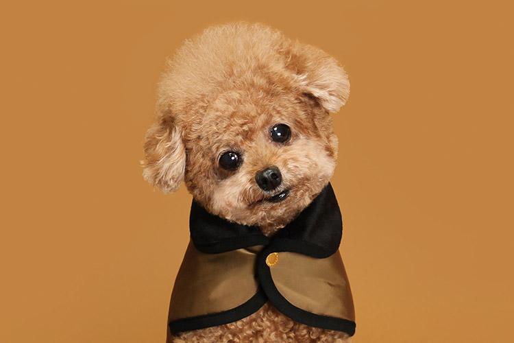 실내의 삶에 익숙한 강아지들은 겨울에 추위를 느낀답니다!::댕댕이, 겨울옷, 옷, 강아지 옷, 반려동물, 라이프, 엘르, elle.co.kr::