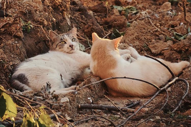 40년이 가까운 시간, 수많은 이야기가 누적된 둔촌동 주공 아파트. 재건축이 결정된 이후 주민들은 떠났지만 그곳에는 오래전부터 그곳에 살았던 고양이들과 그 고양이들을 지켜본 사람들이 있다.::고양이,집사,재건축,둔촌냥이,고양이들의아파트,엘르,elle.co.kr::