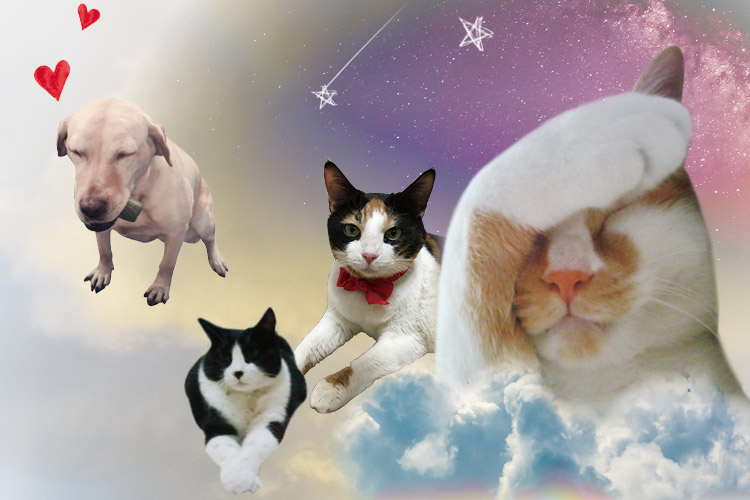동물을 사랑하는 마음으로 가득한 <엘르> 편집부 사람들이, 마음 깊은 곳에서부터 하고 싶었던 이야기::반려동물,펫,강아지,고양이,집사,편집부,스토리,엘르,elle.co.kr::